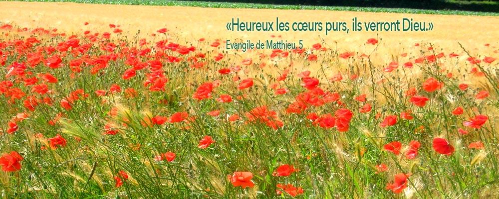 coquelicots-st-benoit-sur-loire